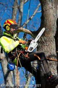 trädfällning karlstad