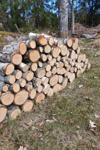 Fällda trädstammar